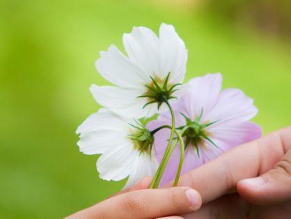 Dankbarkeit lernen - sie wird dein Leben verwandeln!